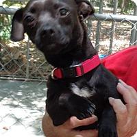 Adopt A Pet :: Turner - Crump, TN