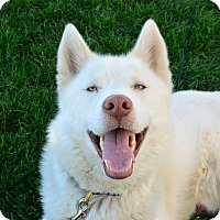 Adopt A Pet :: Blizzard - Meridian, ID