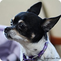 Adopt A Pet :: Mindy - Oak Ridge, NJ