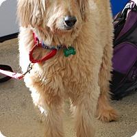 Adopt A Pet :: Carl - West Los Angeles, CA