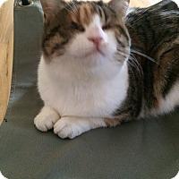 Adopt A Pet :: Cairo - Fairfax, VA