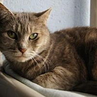 Adopt A Pet :: Gigi - New Milford, CT