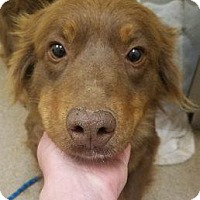 Adopt A Pet :: Jackie #166068 - Apple Valley, CA