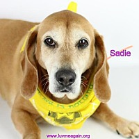 Adopt A Pet :: Sadie - Bloomington, MN