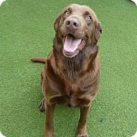 Adopt A Pet :: Biscuit - Yorktown, VA
