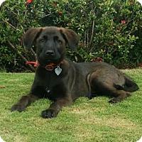 Adopt A Pet :: Kimba - Gloucester, MA
