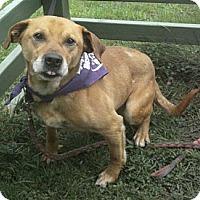 Adopt A Pet :: Preston - Crescent City, CA