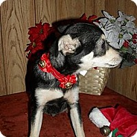Adopt A Pet :: Kit - Chandlersville, OH