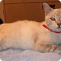 Adopt A Pet :: Sophie - Warren, MI