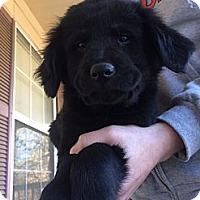 Adopt A Pet :: Faith - Fort Valley, GA