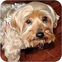 Adopt A Pet :: Puppy - Woodbridge, VA