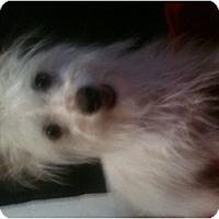 Adopt A Pet :: Ike - West Hills, CA