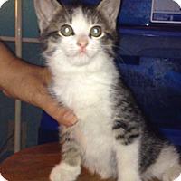 Adopt A Pet :: Frisky - Piscataway, NJ