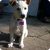 Adopt A Pet :: Cassie - Saskatoon, SK