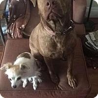 Adopt A Pet :: MAC (Courtesy Post) - LOS ANGELES, CA