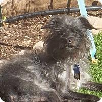 Adopt A Pet :: Gracie*ADOPTION FEE WAIVED** - Las Vegas, NV