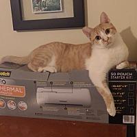 Adopt A Pet :: CC - Quail Valley, CA