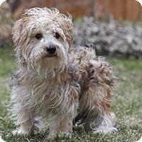 Adopt A Pet :: CHARLIE - Ile-Perrot, QC