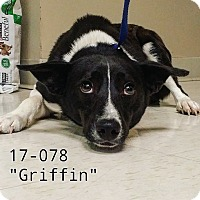 Adopt A Pet :: Griffin - Cannelton, IN