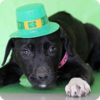 Adopt A Pet :: Queen - Waldorf, MD