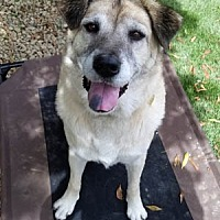 Adopt A Pet :: Sally - Ventura, CA
