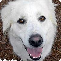 Adopt A Pet :: Oahu in NY - Beacon, NY