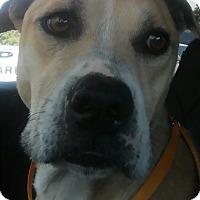 Adopt A Pet :: Dean - Union City, TN