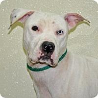 Adopt A Pet :: Frost - Port Washington, NY