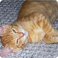 Adopt A Pet :: Rory - Jenkintown, PA