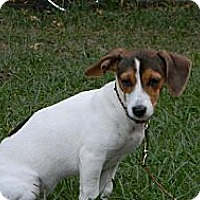 Adopt A Pet :: Dancer - Duluth, GA