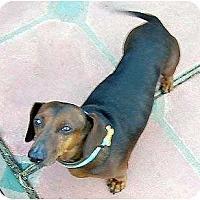 Adopt A Pet :: Rusty - San Jose, CA