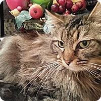 Adopt A Pet :: Madeline - Harrisburg, NC