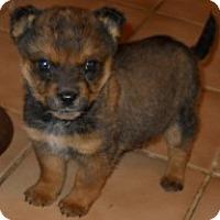 Adopt A Pet :: Cooper - dewey, AZ