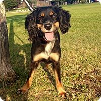 Adopt A Pet :: Julia - Hamilton, ON