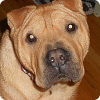 Adopt A Pet :: Yang - Barnegat Light, NJ