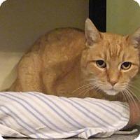 Adopt A Pet :: Rusty - Edmonton, AB