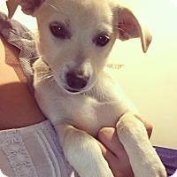 Adopt A Pet :: Genevieve - Foster, RI