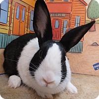Adopt A Pet :: Collette - Foster, RI