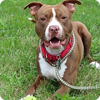 Adopt A Pet :: Rusty - Spring City, PA