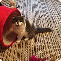 Adopt A Pet :: Ruby Tuesday - Delmont, PA
