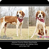 Adopt A Pet :: Dillon - Mt. Gilead, OH