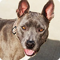 Adopt A Pet :: Diamond - Toccoa, GA
