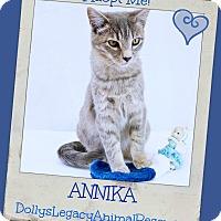 Adopt A Pet :: ANNIKA - Lincoln, NE
