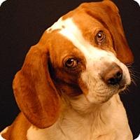 Adopt A Pet :: Viking - Newland, NC
