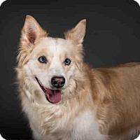 Adopt A Pet :: GIGI - Palmer, AK