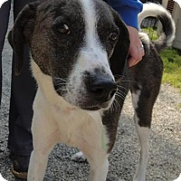 Adopt A Pet :: Melanie - Ridgeland, SC
