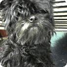 Adopt A Pet :: Lady (Real name)