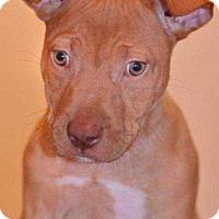 Adopt A Pet :: Chloe C. - Tampa, FL