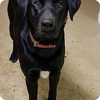 Adopt A Pet :: Jack - San Francisco, CA