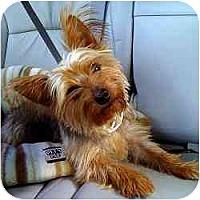 Adopt A Pet :: Jackie - Jacksonville, FL